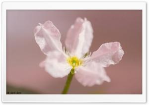 White Flower Close-up Ultra HD Wallpaper for 4K UHD Widescreen desktop, tablet & smartphone
