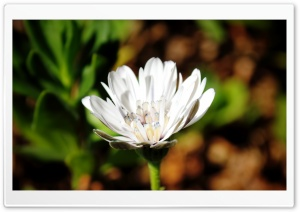 White Flower in a Dark World HD Wide Wallpaper for Widescreen