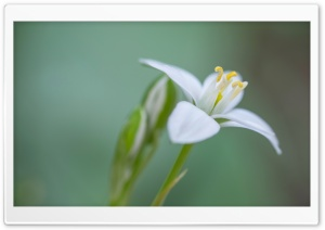 White Flower Macro HD Wide Wallpaper for Widescreen