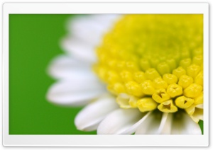 White Flower Macro Green Background HD Wide Wallpaper for Widescreen