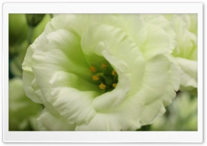 White Flower Macro Photography HD Wide Wallpaper for Widescreen