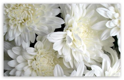 White Flowers HD wallpaper for Wide 16:10 5:3 Widescreen WHXGA WQXGA WUXGA WXGA WGA ; HD 16:9 High Definition WQHD QWXGA 1080p 900p 720p QHD nHD ; Standard 4:3 5:4 3:2 Fullscreen UXGA XGA SVGA QSXGA SXGA DVGA HVGA HQVGA devices ( Apple PowerBook G4 iPhone 4 3G 3GS iPod Touch ) ; Tablet 1:1 ; iPad 1/2/Mini ; Mobile 4:3 5:3 3:2 16:9 5:4 - UXGA XGA SVGA WGA DVGA HVGA HQVGA devices ( Apple PowerBook G4 iPhone 4 3G 3GS iPod Touch ) WQHD QWXGA 1080p 900p 720p QHD nHD QSXGA SXGA ;