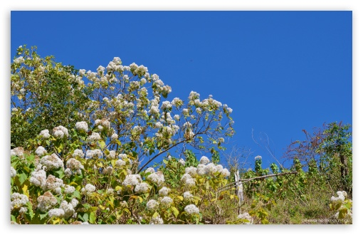 White Flowers and Blue Sky HD wallpaper for Wide 16:10 5:3 Widescreen WHXGA WQXGA WUXGA WXGA WGA ; HD 16:9 High Definition WQHD QWXGA 1080p 900p 720p QHD nHD ; Standard 3:2 Fullscreen DVGA HVGA HQVGA devices ( Apple PowerBook G4 iPhone 4 3G 3GS iPod Touch ) ; Tablet 1:1 ; Mobile 5:3 3:2 16:9 - WGA DVGA HVGA HQVGA devices ( Apple PowerBook G4 iPhone 4 3G 3GS iPod Touch ) WQHD QWXGA 1080p 900p 720p QHD nHD ;