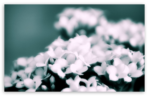 White Flowers Bokeh HD wallpaper for Wide 16:10 5:3 Widescreen WHXGA WQXGA WUXGA WXGA WGA ; HD 16:9 High Definition WQHD QWXGA 1080p 900p 720p QHD nHD ; Standard 4:3 5:4 3:2 Fullscreen UXGA XGA SVGA QSXGA SXGA DVGA HVGA HQVGA devices ( Apple PowerBook G4 iPhone 4 3G 3GS iPod Touch ) ; Tablet 1:1 ; iPad 1/2/Mini ; Mobile 4:3 5:3 3:2 16:9 5:4 - UXGA XGA SVGA WGA DVGA HVGA HQVGA devices ( Apple PowerBook G4 iPhone 4 3G 3GS iPod Touch ) WQHD QWXGA 1080p 900p 720p QHD nHD QSXGA SXGA ; Dual 16:10 5:3 16:9 4:3 5:4 WHXGA WQXGA WUXGA WXGA WGA WQHD QWXGA 1080p 900p 720p QHD nHD UXGA XGA SVGA QSXGA SXGA ;