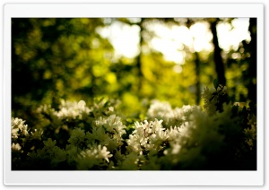 White Flowers Bush HD Wide Wallpaper for Widescreen