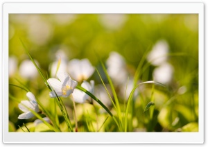 White Flowers Meadow HD Wide Wallpaper for Widescreen