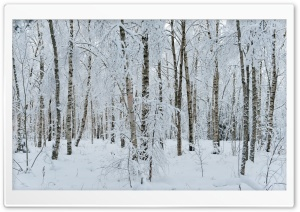 White Forest HD Wide Wallpaper for 4K UHD Widescreen desktop & smartphone