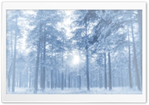 White Forest HD Wide Wallpaper for Widescreen