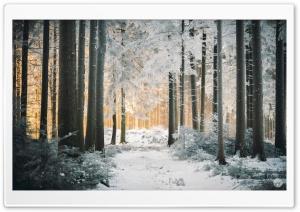 White Forest, Path, Snow, Winter, Sunlight Ultra HD Wallpaper for 4K UHD Widescreen desktop, tablet & smartphone