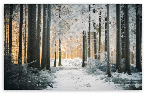 White Forest, Path, Snow, Winter, Sunlight UltraHD Wallpaper for Wide 16:10 5:3 Widescreen WHXGA WQXGA WUXGA WXGA WGA ; 8K UHD TV 16:9 Ultra High Definition 2160p 1440p 1080p 900p 720p ; Standard 3:2 Fullscreen DVGA HVGA HQVGA ( Apple PowerBook G4 iPhone 4 3G 3GS iPod Touch ) ; Mobile 5:3 3:2 16:9 - WGA DVGA HVGA HQVGA ( Apple PowerBook G4 iPhone 4 3G 3GS iPod Touch ) 2160p 1440p 1080p 900p 720p ;
