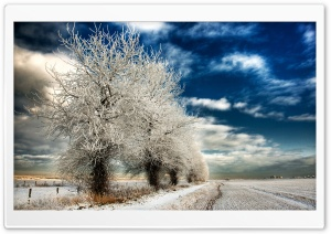 White Frozen Trees HD Wide Wallpaper for Widescreen