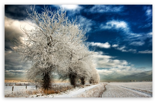 White Frozen Trees HD wallpaper for Wide 16:10 5:3 Widescreen WHXGA WQXGA WUXGA WXGA WGA ; HD 16:9 High Definition WQHD QWXGA 1080p 900p 720p QHD nHD ; Standard 4:3 5:4 3:2 Fullscreen UXGA XGA SVGA QSXGA SXGA DVGA HVGA HQVGA devices ( Apple PowerBook G4 iPhone 4 3G 3GS iPod Touch ) ; Tablet 1:1 ; iPad 1/2/Mini ; Mobile 4:3 5:3 3:2 16:9 5:4 - UXGA XGA SVGA WGA DVGA HVGA HQVGA devices ( Apple PowerBook G4 iPhone 4 3G 3GS iPod Touch ) WQHD QWXGA 1080p 900p 720p QHD nHD QSXGA SXGA ; Dual 5:4 QSXGA SXGA ;