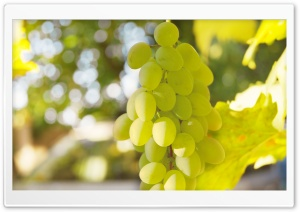 White Grape HD Wide Wallpaper for 4K UHD Widescreen desktop & smartphone