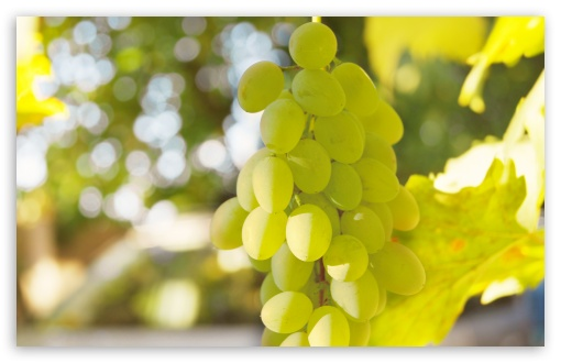 White Grape HD wallpaper for Wide 16:10 5:3 Widescreen WHXGA WQXGA WUXGA WXGA WGA ; HD 16:9 High Definition WQHD QWXGA 1080p 900p 720p QHD nHD ; UHD 16:9 WQHD QWXGA 1080p 900p 720p QHD nHD ; Standard 4:3 5:4 3:2 Fullscreen UXGA XGA SVGA QSXGA SXGA DVGA HVGA HQVGA devices ( Apple PowerBook G4 iPhone 4 3G 3GS iPod Touch ) ; Tablet 1:1 ; iPad 1/2/Mini ; Mobile 4:3 5:3 3:2 16:9 5:4 - UXGA XGA SVGA WGA DVGA HVGA HQVGA devices ( Apple PowerBook G4 iPhone 4 3G 3GS iPod Touch ) WQHD QWXGA 1080p 900p 720p QHD nHD QSXGA SXGA ;