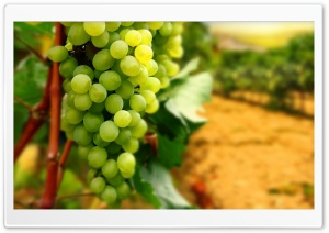 White Grapes HD Wide Wallpaper for 4K UHD Widescreen desktop & smartphone