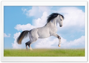 White Horse HD Wide Wallpaper for 4K UHD Widescreen desktop & smartphone