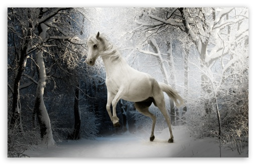 White Horse HD wallpaper for Wide 16:10 5:3 Widescreen WHXGA WQXGA WUXGA WXGA WGA ; HD 16:9 High Definition WQHD QWXGA 1080p 900p 720p QHD nHD ; UHD 16:9 WQHD QWXGA 1080p 900p 720p QHD nHD ; Standard 4:3 5:4 3:2 Fullscreen UXGA XGA SVGA QSXGA SXGA DVGA HVGA HQVGA devices ( Apple PowerBook G4 iPhone 4 3G 3GS iPod Touch ) ; Smartphone 5:3 WGA ; Tablet 1:1 ; iPad 1/2/Mini ; Mobile 4:3 5:3 3:2 16:9 5:4 - UXGA XGA SVGA WGA DVGA HVGA HQVGA devices ( Apple PowerBook G4 iPhone 4 3G 3GS iPod Touch ) WQHD QWXGA 1080p 900p 720p QHD nHD QSXGA SXGA ; Dual 4:3 5:4 UXGA XGA SVGA QSXGA SXGA ;