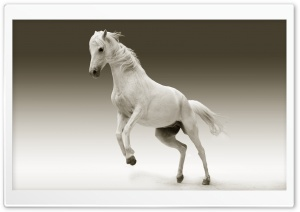 White Horse Ultra HD Wallpaper for 4K UHD Widescreen desktop, tablet & smartphone