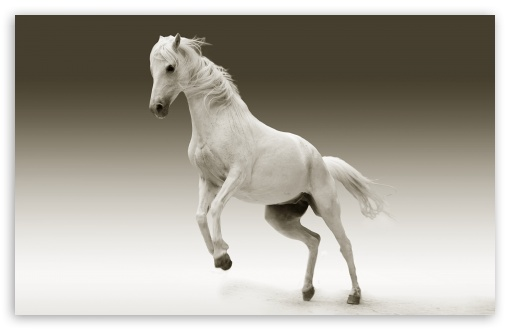 White Horse HD wallpaper for Wide 16:10 5:3 Widescreen WHXGA WQXGA WUXGA WXGA WGA ; HD 16:9 High Definition WQHD QWXGA 1080p 900p 720p QHD nHD ; UHD 16:9 WQHD QWXGA 1080p 900p 720p QHD nHD ; Standard 4:3 5:4 3:2 Fullscreen UXGA XGA SVGA QSXGA SXGA DVGA HVGA HQVGA devices ( Apple PowerBook G4 iPhone 4 3G 3GS iPod Touch ) ; Tablet 1:1 ; iPad 1/2/Mini ; Mobile 4:3 5:3 3:2 16:9 5:4 - UXGA XGA SVGA WGA DVGA HVGA HQVGA devices ( Apple PowerBook G4 iPhone 4 3G 3GS iPod Touch ) WQHD QWXGA 1080p 900p 720p QHD nHD QSXGA SXGA ;