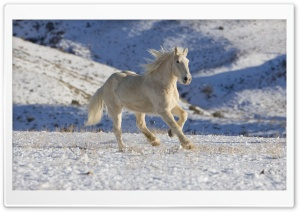 White Horse HD Wide Wallpaper for Widescreen
