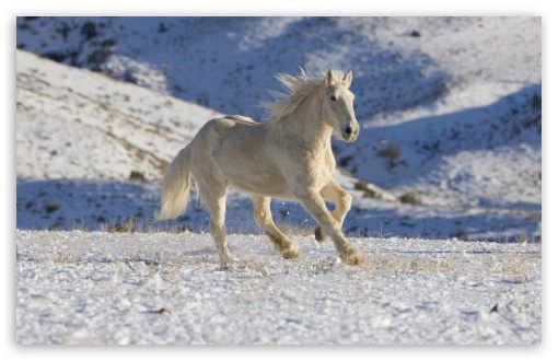 White Horse HD wallpaper for Wide 16:10 5:3 Widescreen WHXGA WQXGA WUXGA WXGA WGA ; HD 16:9 High Definition WQHD QWXGA 1080p 900p 720p QHD nHD ; Standard 4:3 5:4 3:2 Fullscreen UXGA XGA SVGA QSXGA SXGA DVGA HVGA HQVGA devices ( Apple PowerBook G4 iPhone 4 3G 3GS iPod Touch ) ; Tablet 1:1 ; iPad 1/2/Mini ; Mobile 4:3 5:3 3:2 16:9 5:4 - UXGA XGA SVGA WGA DVGA HVGA HQVGA devices ( Apple PowerBook G4 iPhone 4 3G 3GS iPod Touch ) WQHD QWXGA 1080p 900p 720p QHD nHD QSXGA SXGA ;