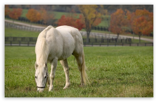 White Horse Grazing ❤ 4K UHD Wallpaper for Wide 16:10 5:3 Widescreen WHXGA WQXGA WUXGA WXGA WGA ; 4K UHD 16:9 Ultra High Definition 2160p 1440p 1080p 900p 720p ; Standard 4:3 5:4 3:2 Fullscreen UXGA XGA SVGA QSXGA SXGA DVGA HVGA HQVGA ( Apple PowerBook G4 iPhone 4 3G 3GS iPod Touch ) ; Tablet 1:1 ; iPad 1/2/Mini ; Mobile 4:3 5:3 3:2 16:9 5:4 - UXGA XGA SVGA WGA DVGA HVGA HQVGA ( Apple PowerBook G4 iPhone 4 3G 3GS iPod Touch ) 2160p 1440p 1080p 900p 720p QSXGA SXGA ;