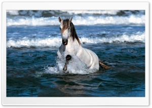 White Horse Running In Water HD Wide Wallpaper for Widescreen