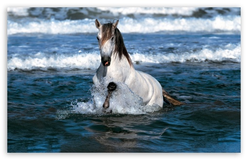 White Horse Running In Water HD wallpaper for Wide 16:10 5:3 Widescreen WHXGA WQXGA WUXGA WXGA WGA ; HD 16:9 High Definition WQHD QWXGA 1080p 900p 720p QHD nHD ; Standard 4:3 5:4 3:2 Fullscreen UXGA XGA SVGA QSXGA SXGA DVGA HVGA HQVGA devices ( Apple PowerBook G4 iPhone 4 3G 3GS iPod Touch ) ; Tablet 1:1 ; iPad 1/2/Mini ; Mobile 4:3 5:3 3:2 16:9 5:4 - UXGA XGA SVGA WGA DVGA HVGA HQVGA devices ( Apple PowerBook G4 iPhone 4 3G 3GS iPod Touch ) WQHD QWXGA 1080p 900p 720p QHD nHD QSXGA SXGA ;