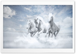 White Horses HD Wide Wallpaper for Widescreen