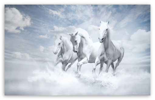 White Horses ❤ 4K UHD Wallpaper for Wide 16:10 5:3 Widescreen WHXGA WQXGA WUXGA WXGA WGA ; 4K UHD 16:9 Ultra High Definition 2160p 1440p 1080p 900p 720p ; Standard 4:3 5:4 3:2 Fullscreen UXGA XGA SVGA QSXGA SXGA DVGA HVGA HQVGA ( Apple PowerBook G4 iPhone 4 3G 3GS iPod Touch ) ; Tablet 1:1 ; iPad 1/2/Mini ; Mobile 4:3 5:3 3:2 16:9 5:4 - UXGA XGA SVGA WGA DVGA HVGA HQVGA ( Apple PowerBook G4 iPhone 4 3G 3GS iPod Touch ) 2160p 1440p 1080p 900p 720p QSXGA SXGA ;