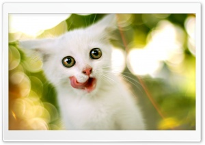 White Kitten Ultra HD Wallpaper for 4K UHD Widescreen desktop, tablet & smartphone