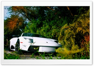 White Lamborghini Murcielago HD Wide Wallpaper for Widescreen