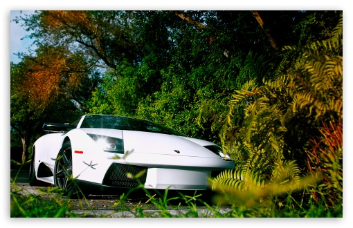 White Lamborghini Murcielago HD wallpaper for Wide 16:10 5:3 Widescreen WHXGA WQXGA WUXGA WXGA WGA ; HD 16:9 High Definition WQHD QWXGA 1080p 900p 720p QHD nHD ; Standard 4:3 5:4 3:2 Fullscreen UXGA XGA SVGA QSXGA SXGA DVGA HVGA HQVGA devices ( Apple PowerBook G4 iPhone 4 3G 3GS iPod Touch ) ; Tablet 1:1 ; iPad 1/2/Mini ; Mobile 4:3 5:3 3:2 16:9 5:4 - UXGA XGA SVGA WGA DVGA HVGA HQVGA devices ( Apple PowerBook G4 iPhone 4 3G 3GS iPod Touch ) WQHD QWXGA 1080p 900p 720p QHD nHD QSXGA SXGA ; Dual 16:10 5:3 4:3 5:4 WHXGA WQXGA WUXGA WXGA WGA UXGA XGA SVGA QSXGA SXGA ;