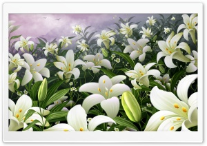 White Lilies HD Wide Wallpaper for 4K UHD Widescreen desktop & smartphone