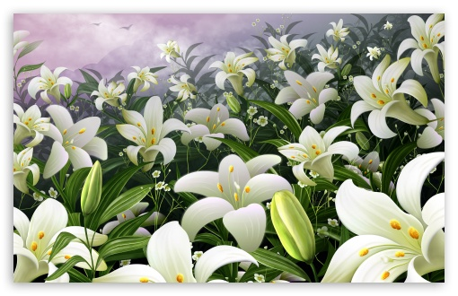 White Lilies HD wallpaper for Wide 16:10 5:3 Widescreen WHXGA WQXGA WUXGA WXGA WGA ; HD 16:9 High Definition WQHD QWXGA 1080p 900p 720p QHD nHD ; Standard 4:3 5:4 3:2 Fullscreen UXGA XGA SVGA QSXGA SXGA DVGA HVGA HQVGA devices ( Apple PowerBook G4 iPhone 4 3G 3GS iPod Touch ) ; Tablet 1:1 ; iPad 1/2/Mini ; Mobile 4:3 5:3 3:2 16:9 5:4 - UXGA XGA SVGA WGA DVGA HVGA HQVGA devices ( Apple PowerBook G4 iPhone 4 3G 3GS iPod Touch ) WQHD QWXGA 1080p 900p 720p QHD nHD QSXGA SXGA ;