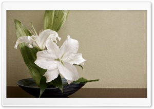White Lilies Arrangement HD Wide Wallpaper for 4K UHD Widescreen desktop & smartphone