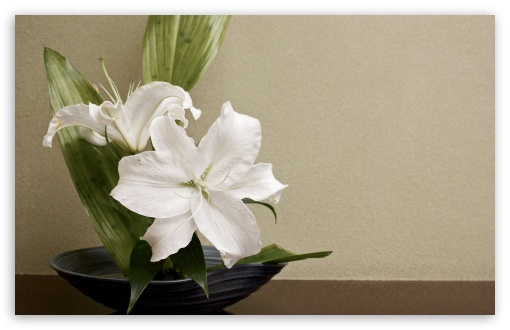 White Lilies Arrangement ❤ 4K UHD Wallpaper for Wide 16:10 5:3 Widescreen WHXGA WQXGA WUXGA WXGA WGA ; 4K UHD 16:9 Ultra High Definition 2160p 1440p 1080p 900p 720p ; UHD 16:9 2160p 1440p 1080p 900p 720p ; Standard 4:3 5:4 3:2 Fullscreen UXGA XGA SVGA QSXGA SXGA DVGA HVGA HQVGA ( Apple PowerBook G4 iPhone 4 3G 3GS iPod Touch ) ; Smartphone 5:3 WGA ; Tablet 1:1 ; iPad 1/2/Mini ; Mobile 4:3 5:3 3:2 16:9 5:4 - UXGA XGA SVGA WGA DVGA HVGA HQVGA ( Apple PowerBook G4 iPhone 4 3G 3GS iPod Touch ) 2160p 1440p 1080p 900p 720p QSXGA SXGA ;