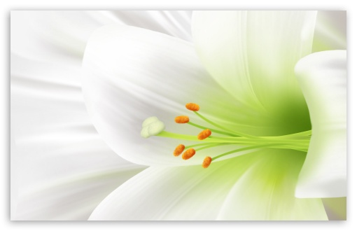 White Lily, Easter Flower HD wallpaper for Standard 4:3 5:4 Fullscreen UXGA XGA SVGA QSXGA SXGA ; Wide 16:10 5:3 Widescreen WHXGA WQXGA WUXGA WXGA WGA ; HD 16:9 High Definition WQHD QWXGA 1080p 900p 720p QHD nHD ; Other 3:2 DVGA HVGA HQVGA devices ( Apple PowerBook G4 iPhone 4 3G 3GS iPod Touch ) ; Mobile VGA WVGA iPhone iPad PSP Phone - VGA QVGA Smartphone ( PocketPC GPS iPod Zune BlackBerry HTC Samsung LG Nokia Eten Asus ) WVGA WQVGA Smartphone ( HTC Samsung Sony Ericsson LG Vertu MIO ) HVGA Smartphone ( Apple iPhone iPod BlackBerry HTC Samsung Nokia ) Sony PSP Zune HD Zen ; Tablet 2 ;