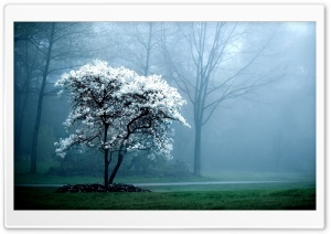 White Magnolia Tree HD Wide Wallpaper for Widescreen