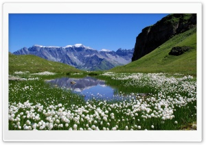 White Mountain Flowers HD Wide Wallpaper for Widescreen