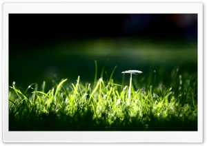 White Mushroom HD Wide Wallpaper for Widescreen