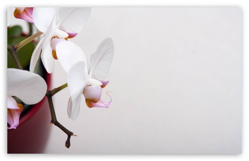 White Orchidee ❤ 4K UHD Wallpaper for Wide 16:10 5:3 Widescreen WHXGA WQXGA WUXGA WXGA WGA ; 4K UHD 16:9 Ultra High Definition 2160p 1440p 1080p 900p 720p ; UHD 16:9 2160p 1440p 1080p 900p 720p ; Standard 4:3 5:4 3:2 Fullscreen UXGA XGA SVGA QSXGA SXGA DVGA HVGA HQVGA ( Apple PowerBook G4 iPhone 4 3G 3GS iPod Touch ) ; Smartphone 5:3 WGA ; Tablet 1:1 ; iPad 1/2/Mini ; Mobile 4:3 5:3 3:2 16:9 5:4 - UXGA XGA SVGA WGA DVGA HVGA HQVGA ( Apple PowerBook G4 iPhone 4 3G 3GS iPod Touch ) 2160p 1440p 1080p 900p 720p QSXGA SXGA ;