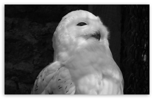 White Owl Black and White HD wallpaper for Wide 16:10 5:3 Widescreen WHXGA WQXGA WUXGA WXGA WGA ; HD 16:9 High Definition WQHD QWXGA 1080p 900p 720p QHD nHD ; UHD 16:9 WQHD QWXGA 1080p 900p 720p QHD nHD ; Standard 4:3 5:4 3:2 Fullscreen UXGA XGA SVGA QSXGA SXGA DVGA HVGA HQVGA devices ( Apple PowerBook G4 iPhone 4 3G 3GS iPod Touch ) ; Tablet 1:1 ; iPad 1/2/Mini ; Mobile 4:3 5:3 3:2 16:9 5:4 - UXGA XGA SVGA WGA DVGA HVGA HQVGA devices ( Apple PowerBook G4 iPhone 4 3G 3GS iPod Touch ) WQHD QWXGA 1080p 900p 720p QHD nHD QSXGA SXGA ;