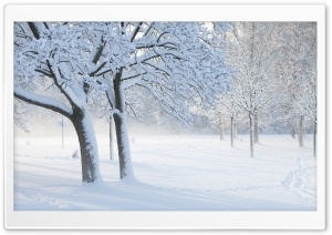 White Park HD Wide Wallpaper for Widescreen