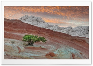 White Pocket - Vermilion Cliffs National Monument HD Wide Wallpaper for Widescreen