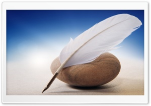 White Quill HD Wide Wallpaper for Widescreen