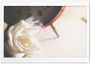 White Rose HD Wide Wallpaper for Widescreen