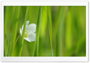 White Small Flower HD Wide Wallpaper for Widescreen