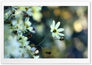 White Small Flowers HD Wide Wallpaper for Widescreen