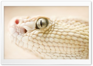 White Snake HD Wide Wallpaper for Widescreen